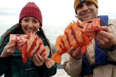Nice looking rockfish