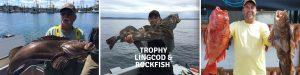 Trophy Lingcod & Rockfish