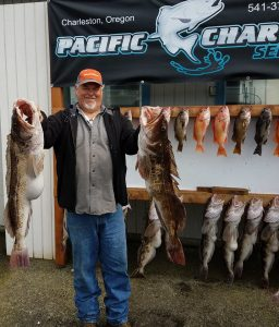 Giant Lingcod out of Charleston, Oregon