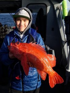 Large Vermillion Rockfish