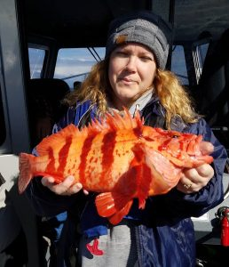 Large Tiger Rockfish
